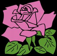 pink_rose_T